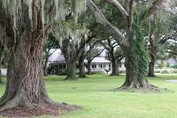 Audubon clubhouse oak trees horiz.jpg
