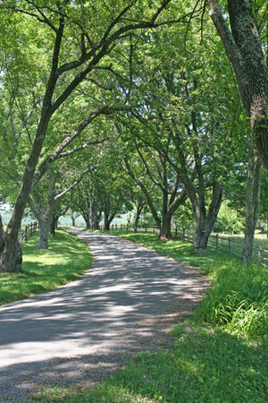 road to Madison House.jpg