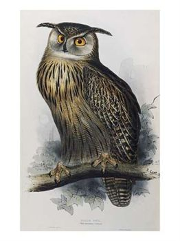 gould-john-eagle-owl-lithographic-plate-from-the-birds-of-europe-1062899.jpg