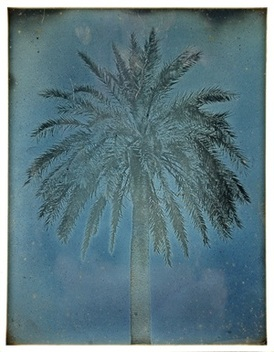 01-palm-tree-near-the-church-of-saints-theodore-athens.jpg